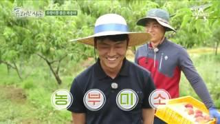 완전 꿀팁! '우렁이 퇴비'로 키우는 친환경 복숭아 대 공개!