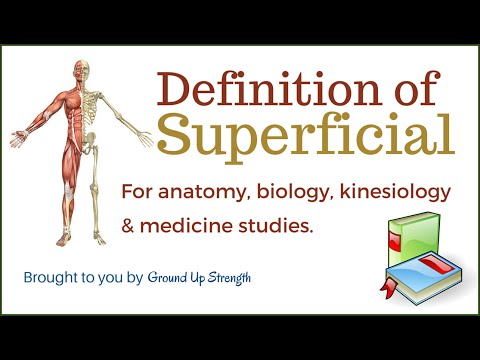 Superficial Anatomy On Wikinow News Videos Facts