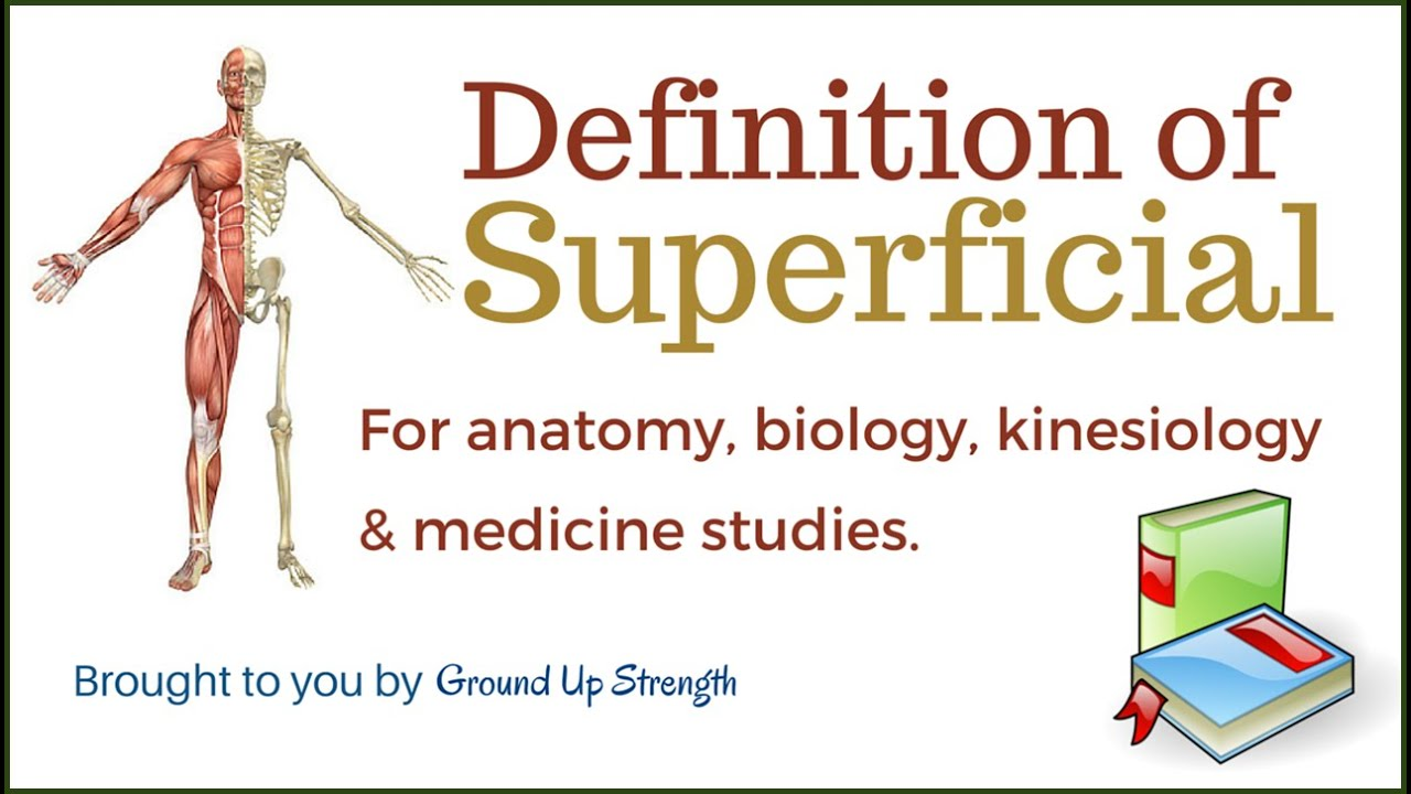 Superficial Definition (Anatomy, Medicine, Kinesiology) - YouTube