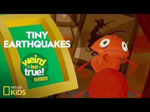 Earthquakes for KS1 and KS2 children   Earthquakes homework