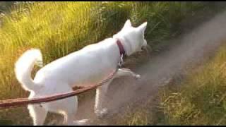 紀州犬との散歩を撮影しました。ごゆっくりお楽しみ下さい。