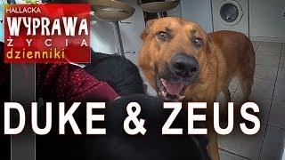 Duke & Zeus - poznajcie dwóch lokatorów - Dzienniki