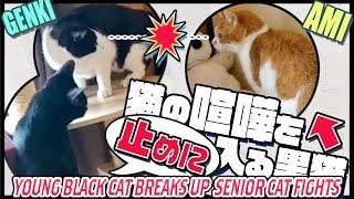 お年寄り猫の仲裁に入る黒猫(くろみつ)です。 Subscribe to MAKO0MAKO...