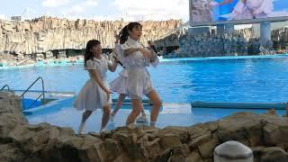 2019.02.13 名古屋港水族館にて春季のCMソングに採用されたTEAM SHACHI...