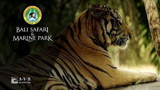 Bali Safari & Marine Park Corporate Video