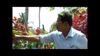Variety Terrace Vegetable Farming In Kollam ( MATTUPPAVU KRISHI)......