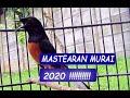 Masteran Murai Batu Suara Jernih Full Isian 2020 Audio(.mp3 .mp4) Mp3 - Mp4 Download