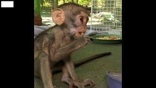 Смешные обезьяны, приколы с животными