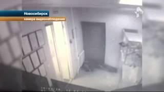 Охранник ломбарда в Новосибирске расстрелял налетчика в пах