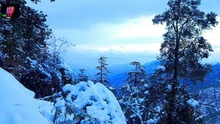 BEAUTY OF SNOWFALL IN SHIMLA