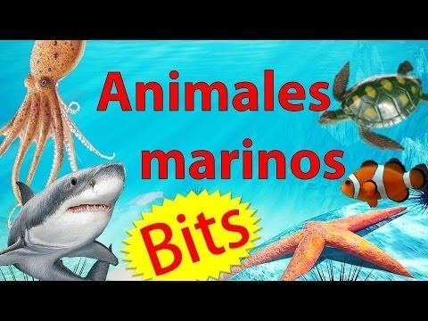Niños De Animales Marinos Los Para Preescolar wy80mOPvnN