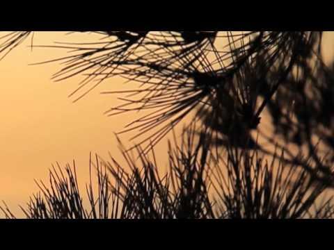 Aklımı Aldılar - Orhan Gencebay– Lyric Video - HD