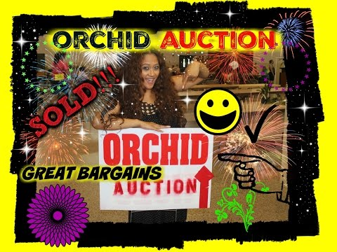 AWESOME DEALS AT THE ORCHID AUCTION!