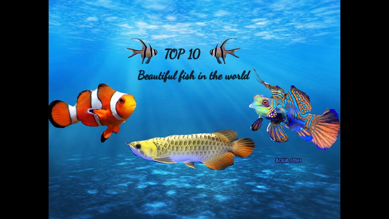Top 10 most beautiful fish in the world youtube for Best fish in the world