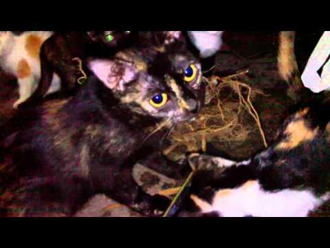 Obat Kucing Doovi