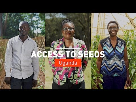 Making Agribusiness Work for Development: Access to Seeds Uganda