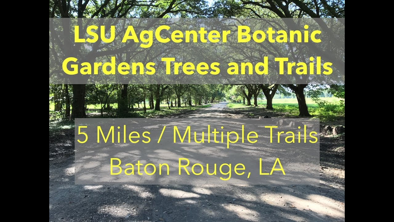Lsu Agcenter Botanic Gardens Trees And Trails Trails In Louisiana Near Baton Rouge Youtube