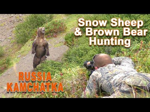 Snow Sheep & Brown Bear Hunting In Kamtchatka – Russia / 2020