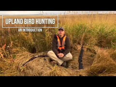 An Intro To Upland Bird Hunting