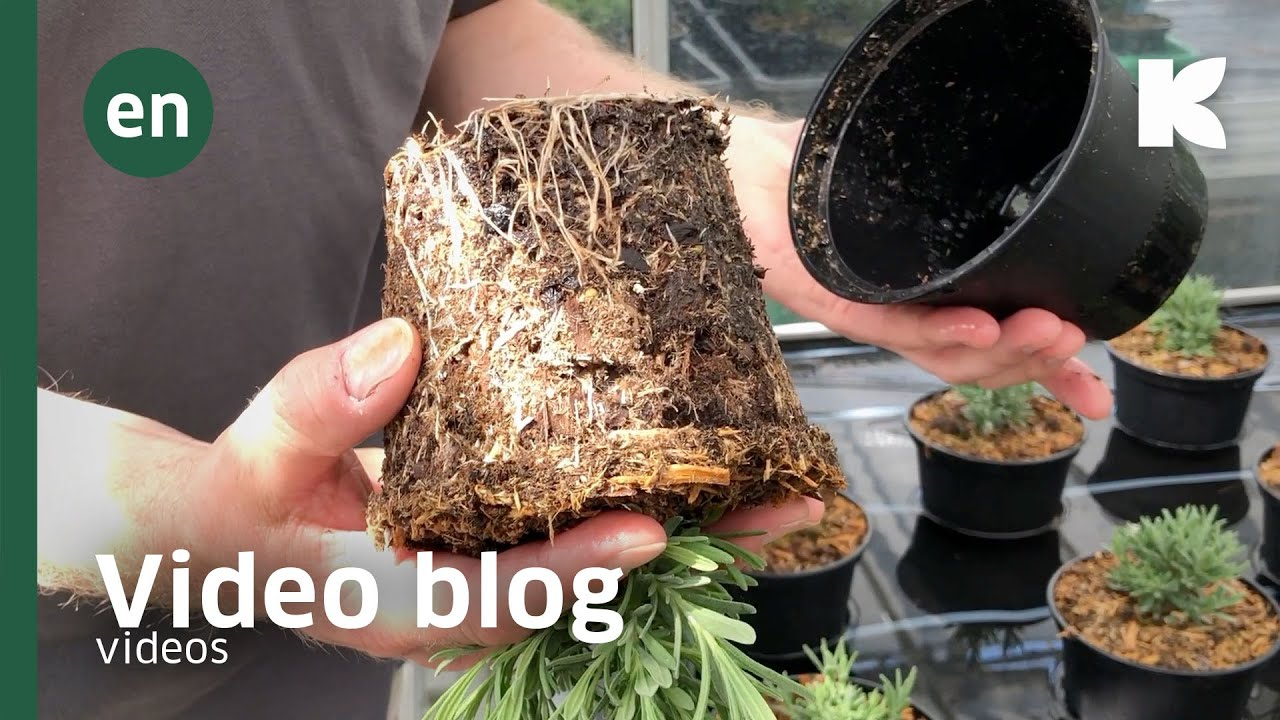 GreenFibre waterflow and drying Video Youtube