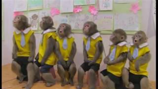おさるの学校【日光さる軍団劇場 演目紹介】Monkey's school Theater theater introduction thumbnail