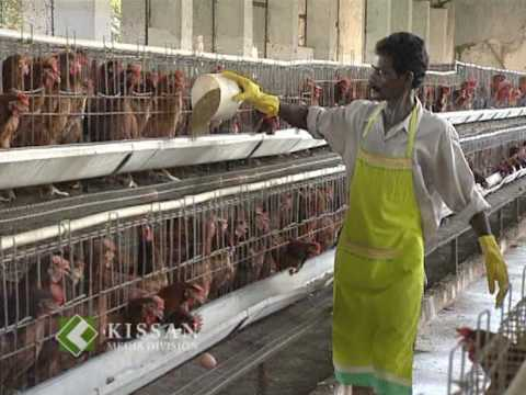Feature On Kerala State Poultry Development Corporation