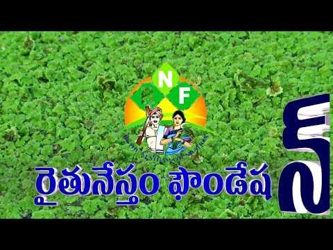 Bio Fertilisers&Pesticides - Azolla