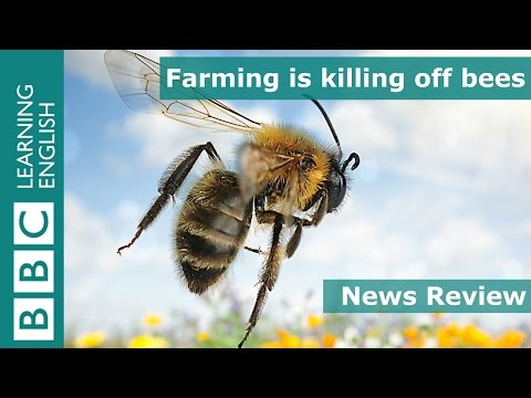 Farming is killing off bees