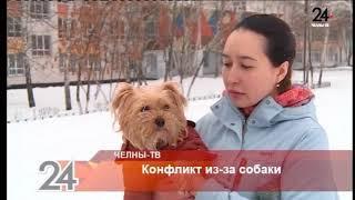 Конфликт из-за собаки