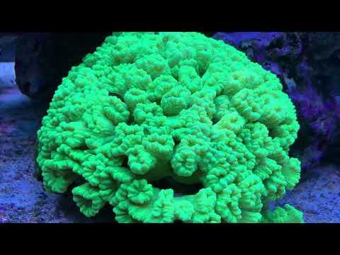 Update Fauna Marin Skim Breeze Atemkalk - CO2 Reduktion, PH-Wert Erhöhen Im Meerwasseraquarium