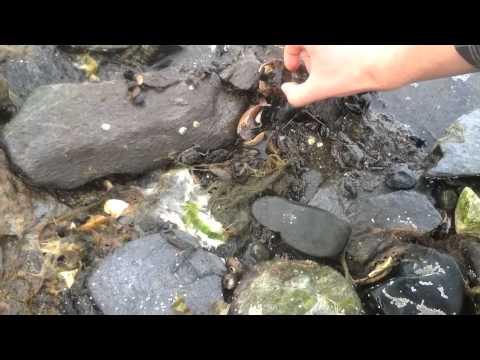 Intertidal Zone movie final