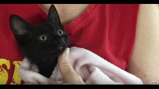 Simple treatment for kitten or cat nasal congestion using saline drops