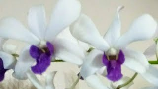Aprendamos Pasos Básicos Para Cuidar Orquídeas Orquideas En El Mundo