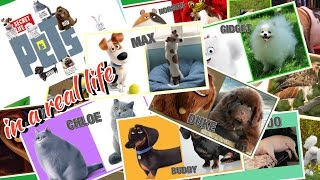The secret life of pets in real life Герои Тайная жизнь домашних животных в реальной жизни!
