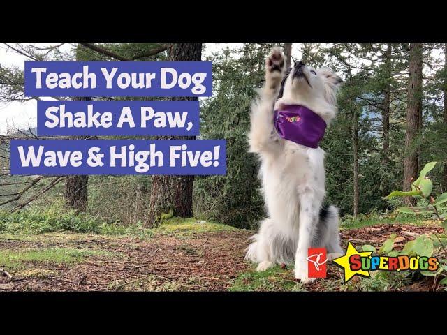 Teach Your Dog Shake A Paw, Wave & High Five   Dog Training