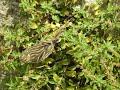 Oiseaux de juillet au cœur de Malras