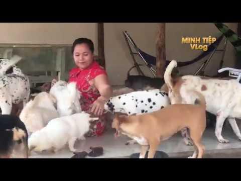 Trần Mi Nhận Nuôi  Hàng 100 CHÓ, MÈO Bị Chủ Vứt Bỏ Ở Sài Gòn