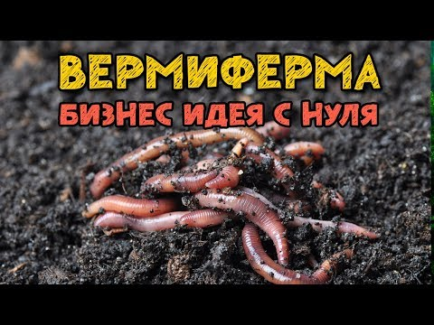 Запуск Вермифермы! Начинаем разводить калифорнийских червей