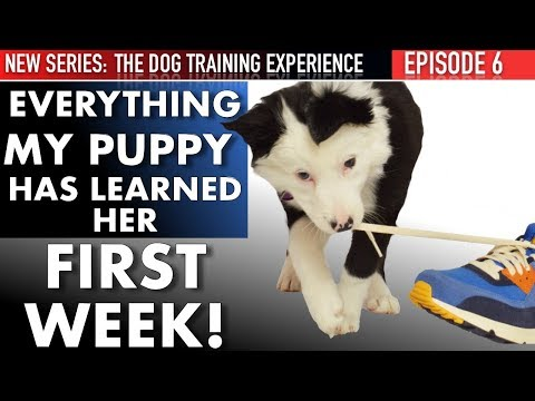 week-1:-this-is-what-i've-taught-my-puppy!-housetraining,-biting,-leash-walking,,-&-more!