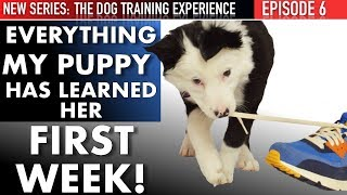 my-puppy-s-first-week-housetraining-biting-first-leash-walking-lesson-leave-it-tricks-more