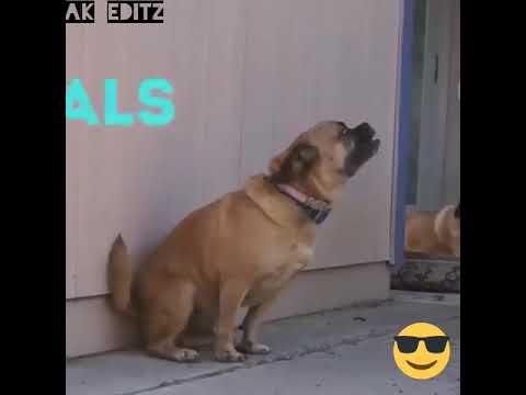 Bol Mey Halgi Bajau Kya Animals Funny Video