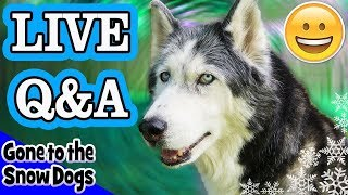 Huskies Live Q&A Talking Dog Cancer, Surgery, and Health Updates