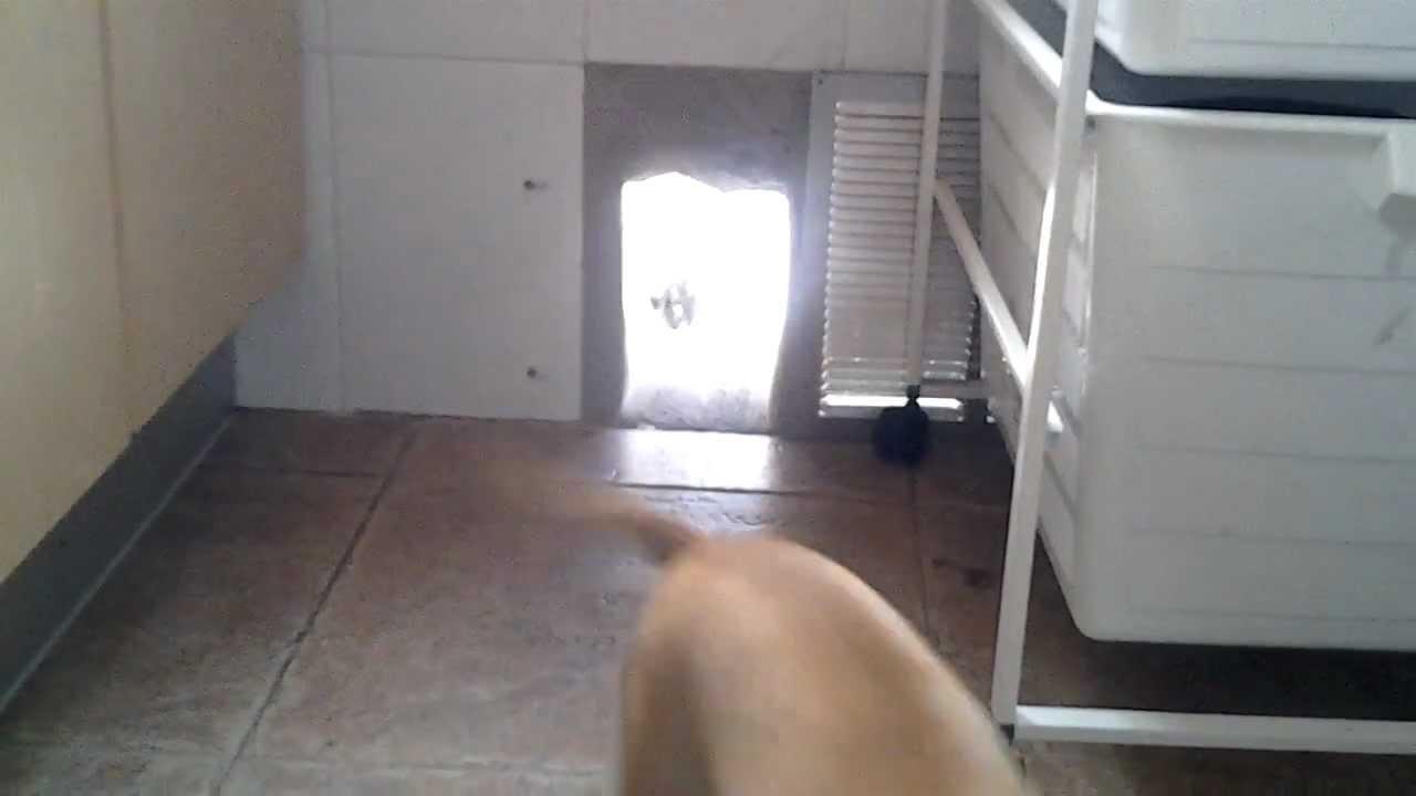 puerta para perros casera