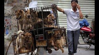Амурчанка спасает от смерти жертв Фестиваля собачьего мяса в Китае