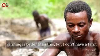 Afrika Da Altın Bu Hayatta Kal