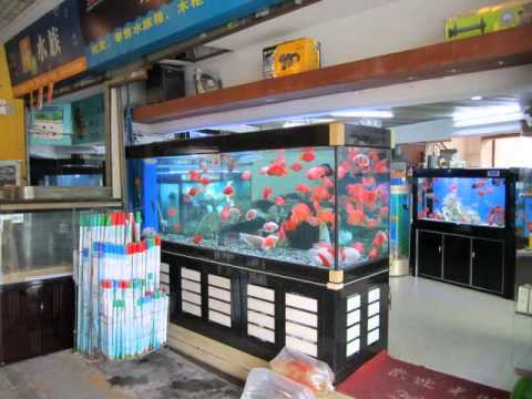 Chinese ornamental fish market youtube for Oriental fish market