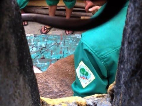Quay lén nhân viên công viên Cây Xanh Đà Nẵng lén lút xẻ thịt nai nuôi trong vườn thú công viên