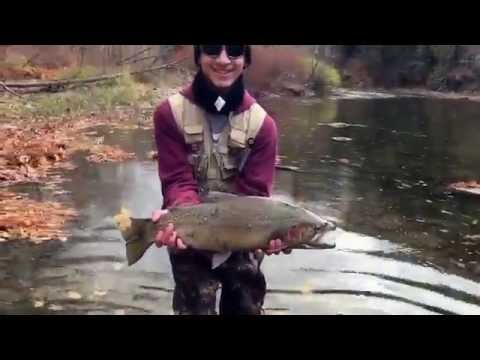 Download Youtube: Huge Steelhead Fishing 18 Mile Creek, WNY