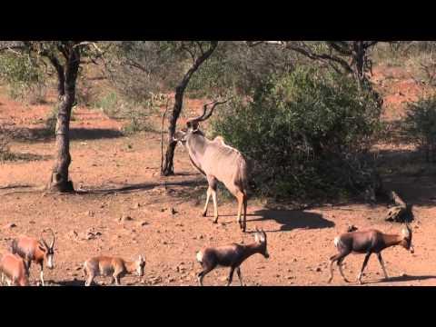 Bushmen Safaris - Kill Shots