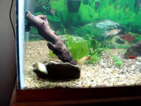 Freshwater Tropical Fish Aquarium  65 Gallon